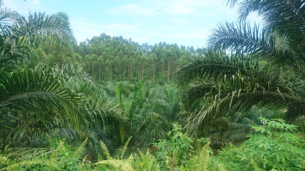 Bioinoculant consultancy for Malaysian forestry industries